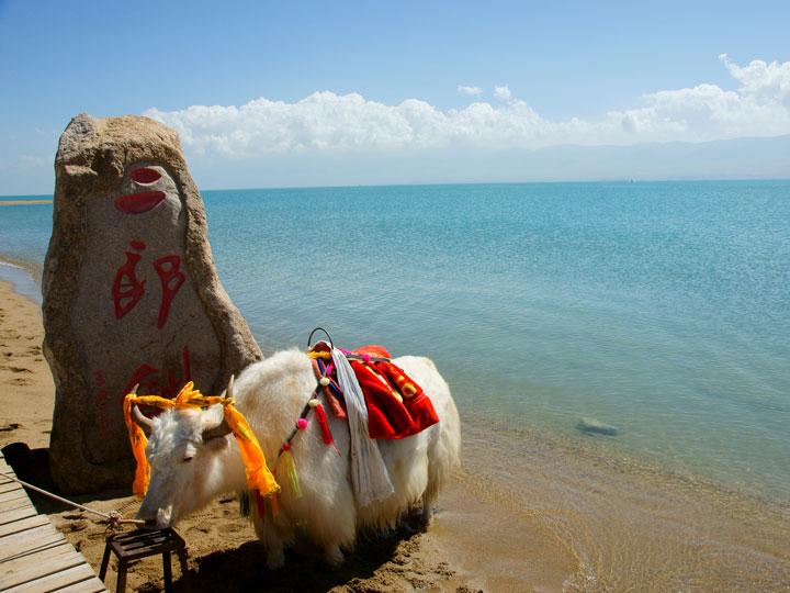 Vacca-sacra-altopiano-qinghai-tibet-cina-emotions-magazine-rivista-viaggi-turismo_n2