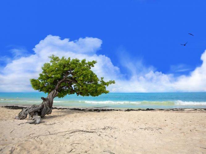 viaggio-aruba-vacanza-aruba-visita-aruba-emotions-magazine-rivista-viaggi-turismo_n5