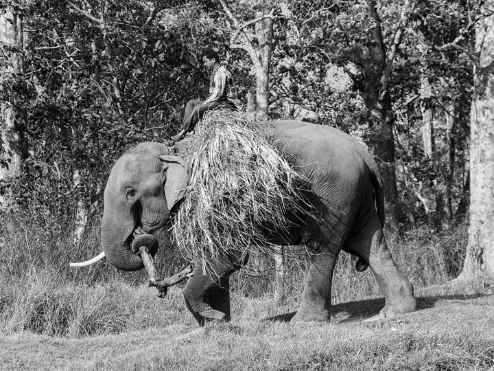 a dorso elefante nepal viaggio nepal sauraha foto lorenzo zelaschi emotions magazine rivista viaggi rivista turismo