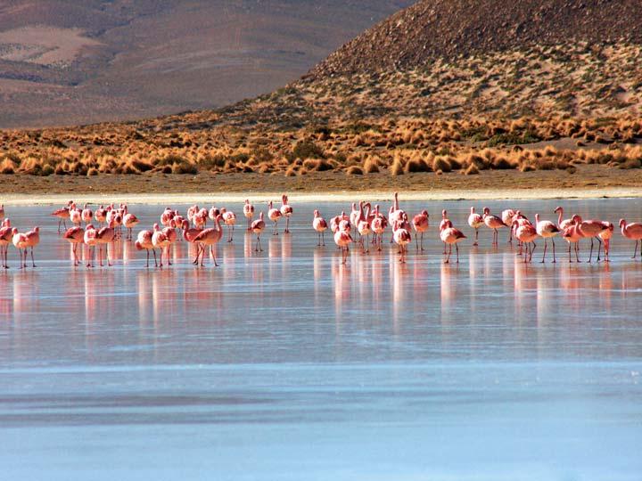 fenicotteri rosa su di un lago ghiacciato Bolivia emotions magazine rivista viaggi rivista turismo