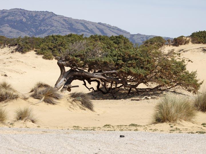 le suggestive dune di Piscinas - vino carignano sulcis - emotions magazine - rivista viaggi - rivista turismo