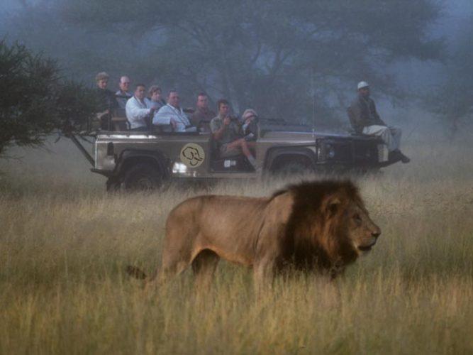 leone safari - viaggio savana sud africana - emotions magazine - rivista viaggi - rivista turismo