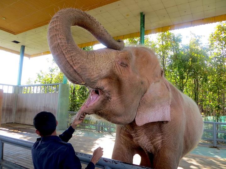7 FOTO) Uno degli elefanti bianchi di Naypyidaw