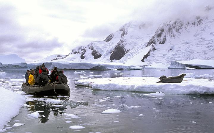 antartico-copia