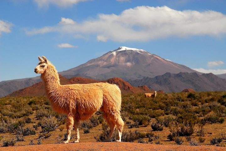Attraverso la Puna Argentina (5)