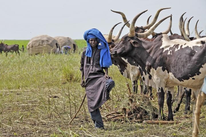 In Chad per il Gerewoll, la festa dei pastori Peul (2) copia