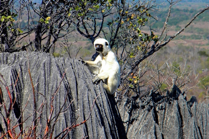 Madagascar_fauna