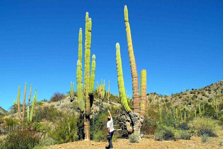 baja25m cactus copia