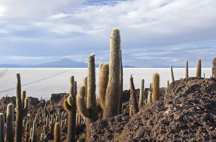 bol15m Salar de Uyuni cactus copia