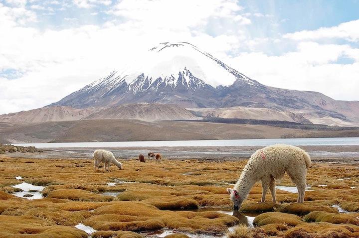 cile08m vulc. Parinacota