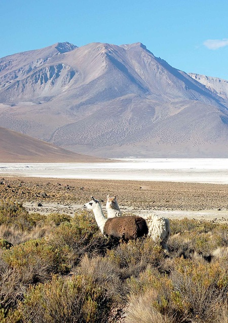 cile15vm salar e alpaca