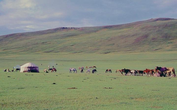 mon74m gher e cavalli copia
