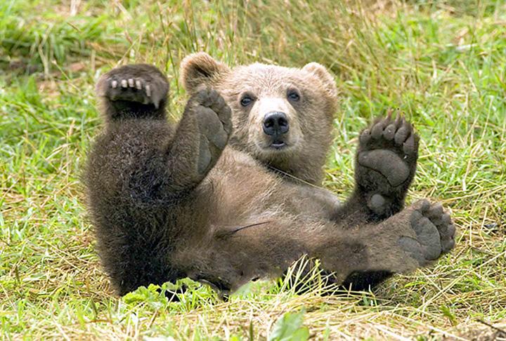 plitvice05m orso bruno copia