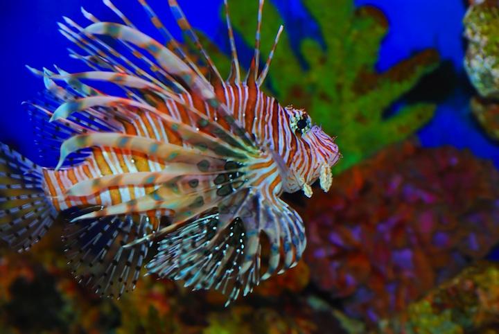 reef-dr_6299382