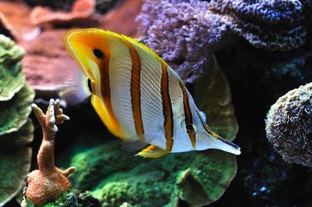 reef.dr.xl_17704865