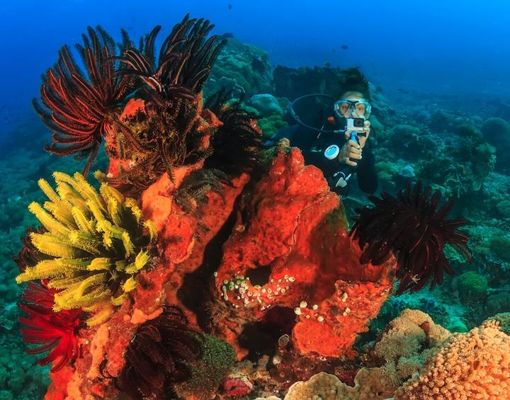 reef.dr_49234804