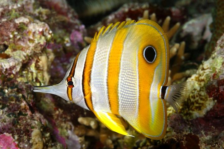 reef.dr_50444053