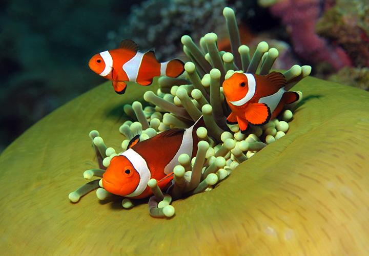 reef-indonesia-manado