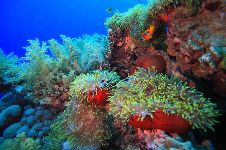 reef_80512828-1