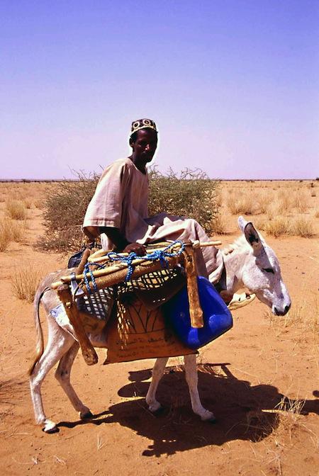 sudan30Mv nomade asino