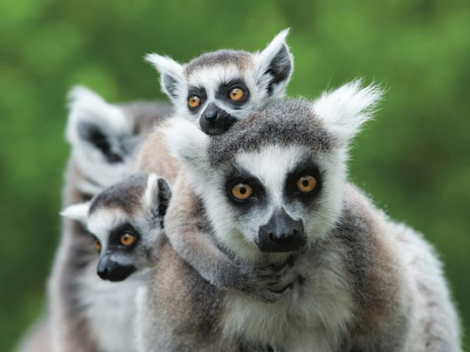 Nosy Komba madagascar isola dei lemuri emotions magazine rivista viaggi rivista turismo