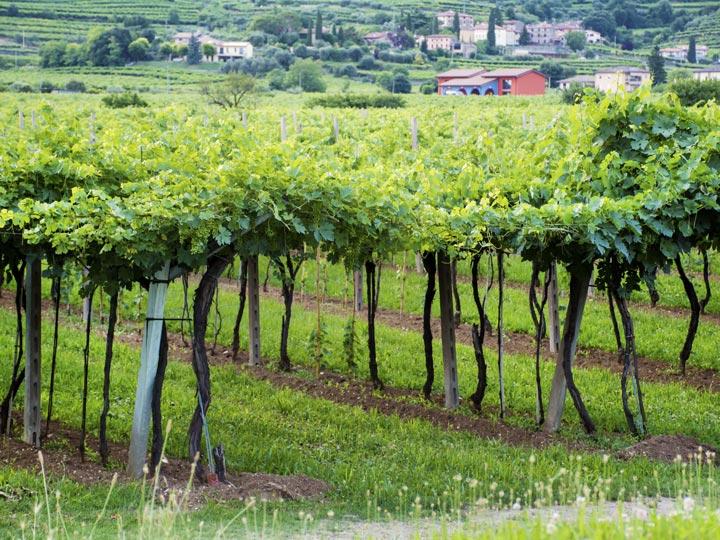 via del soave - vino soave - veronese - emotions magazine - rivista viaggi - rivista turismo
